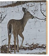 Little White Tail On The Move Wood Print