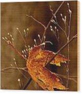 Lonely Leaf Wood Print