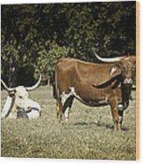 Longhorn Cows Ressting Wood Print by M K  Miller