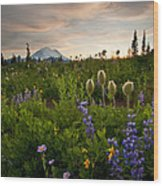 Lupine Sunset Wood Print