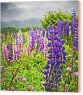 Lupins In Newfoundland Meadow Wood Print
