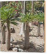 Madagascar Palms Wood Print