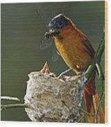 Madagascar Paradise Flycatcher Wood Print