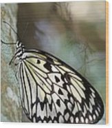 Magical Butterfly Wood Print