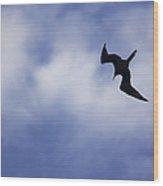 Magnificent Frigatebird In Flight Wood Print