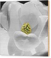Magnolia Wood Print