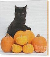 Maine Coon Kitten And Pumpkins Wood Print