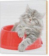 Maine Coon Kitten Wood Print