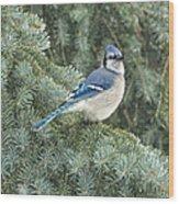 Majestic Blue Jay Wood Print
