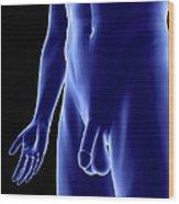 Male Genitalia, Artwork Wood Print