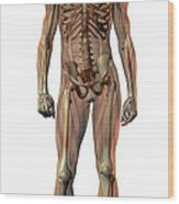Male Skeleton Wood Print