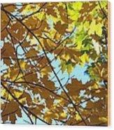 Maple Leaf Canopy Wood Print