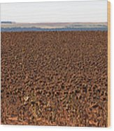March Of The Sunflowers Wood Print