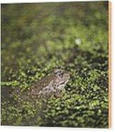 Marsh Frog Wood Print