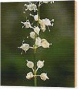 May Lily Wood Print