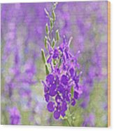 Meadow Of Violets  Wood Print by Kantilal Patel