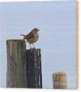 Meadow Pipit Wood Print