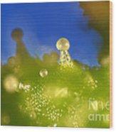 Microscopic View Of Cannabis Sativa Wood Print