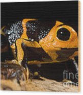 Mimic Poison Frog Wood Print