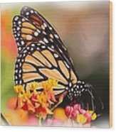 Monarch And Milkweed Wood Print