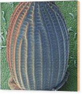 Monarch Butterfly Egg, Sem Wood Print