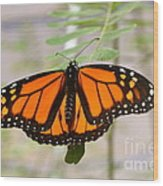 Monarch Majesty Wood Print