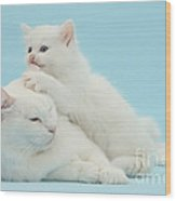 Mother Cat With Kitten Wood Print