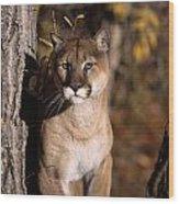 Mountain Lion Wood Print