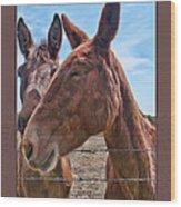Mule Wink Wood Print