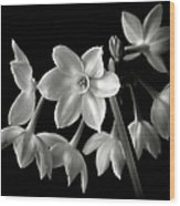 Narcissus In Black And White Wood Print
