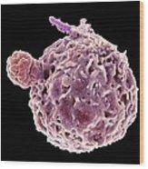 Neutrophil Engulfing Tb Bacteria, Sem Wood Print