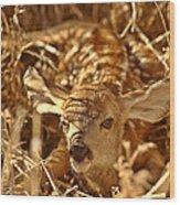 Newly Born Fawn Hiding In A Saskatchewan Field Wood Print