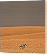 Northern Pintail Pair Out Walking In Saskatchewan Field Wood Print