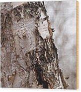 November Birch Wood Print