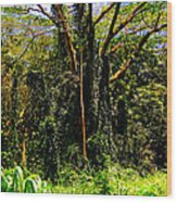 Oahu Rainforest Wood Print