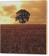 Oak Tree In A Barley Field, Ireland Wood Print