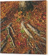 Oak Tree Roots And Pine Needles Wood Print by Raymond Gehman