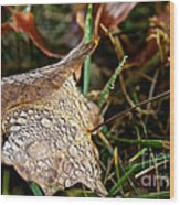 October Rain Drops Wood Print
