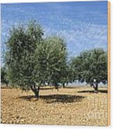 Olives Tree In Provence Wood Print