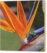 Orange Wood Print