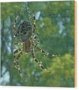 Orb Spider      Summer           Indiana Wood Print