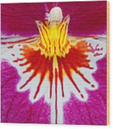 Orchid Closeup Wood Print