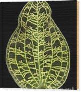 Orchid Leaf Wood Print