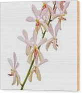 Orchid Panicle Wood Print