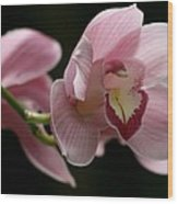 Orchid's  Mystery Wood Print by Valia Bradshaw