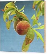 Organic Peach Tree, Wood Print by Pete Starman