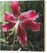 Orienpet Lily Named Scarlet Delight Wood Print