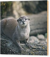 Oriental Small-clawed Otter Wood Print