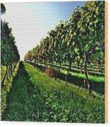 Osoyoos Vineyard Wood Print