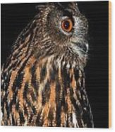 Side Portrait Of An Eagle Owl Wood Print